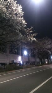 senkawayozakura